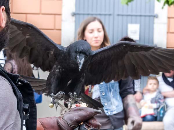 La Potenza del Volo - Corvo Imperiale